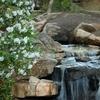 The Bog Garden