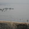 Sewri Fort Bay View