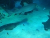 Sharks At The Sydney Aquarium