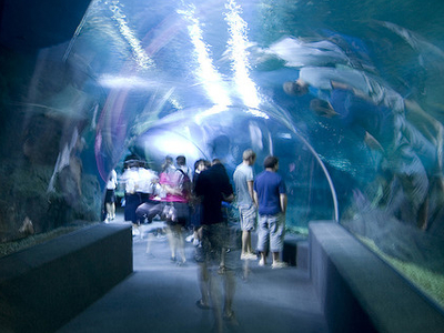 Siam Ocean World