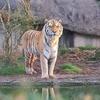 Similipal Eco Tourism Similipal Tiger Reserve 1
