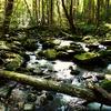 Six Foot Track To Otane Hut - Te Urewera National Park - New Zealand