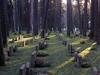 Skogskyrk  Grave