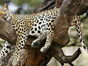 Hwange National Park Day Tour - This and That Safaris Photos