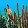 Soft Coral On Benwood Wreck - Key Largo FL