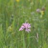 Sorsan Grasslands