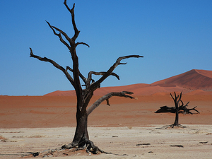 16 Day Johannesburg to Namibia Tour Photos