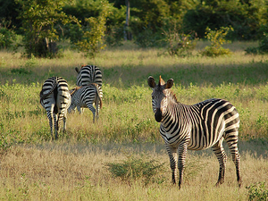 South Luangwa Special Photos