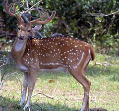 Lothian Island Wildlife Sanctuary