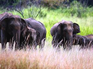 Photography Tour Sri Lanka Photos