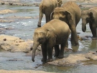 Sri Lanka Travel & Tourism