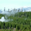 Steam Rising From Lodgepoles