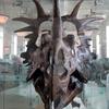 Skeleton Of Styracosaurus