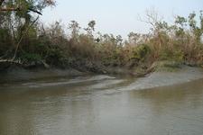 Sundarban From A Boat