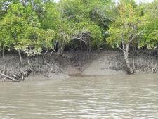 Sundarban Mangrove