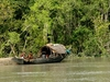 Sundarbans National Park Scenery