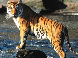 Kanha Trip - The Land of Tiger