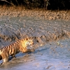 Sundarbans-West-Bengal