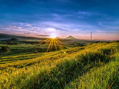 Sunrise At Jatiluwih