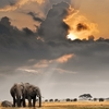 Sunset With Afrikan Elephants