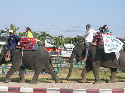 Surin Elephants