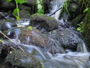Szeszupa River