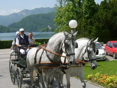 Szilvasvarad - Horses - Hungary