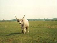 Szálkahalom Reserva Natural