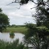 Sabie River East Of Skukuza