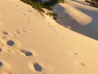 Cronulla Sand Dunes