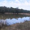 North Swamp In Longneck Lagoon