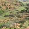 Suikerbosrand Nature Reserve