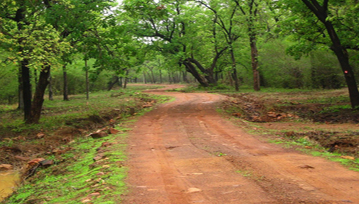 Tadoba National Park Trek