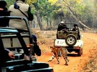 Tadoba Safari Package 2 Days