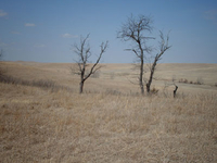 Tallgrass Prairie National Reserve