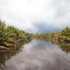 Tanjung Puting National Park Wetland