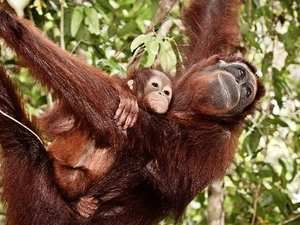 5 Days and 4 Nights Orangutan and Dayak Bokonsu Trip Photos