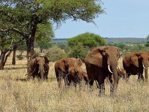3 Days Tanzania Southern Circuit Safari Photos