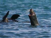 Tapuae Marine Reserve