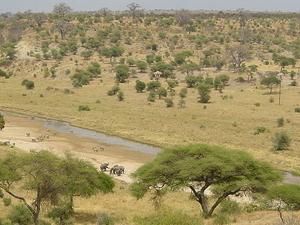 Camping Safaris in the Tarangire, Manyara, Lake Eyasi, Serengeti & Ngorongoro Photos