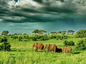 7 Day Lodge Safari Arusha Tarangire Manyara Serengeti Ngorongoro Photos