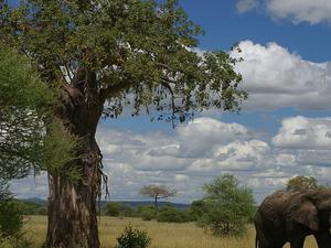 4 Days Wildlife Safari Photos