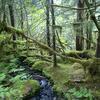 Tawa Hut To Makokoere Hut Trail - Te Urewera National Park - New Zealand