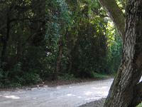 Tawai Ridge Track to Otapukawa Stream