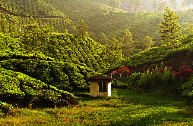 Munnar, Thekkady, Alappy, Cochin, Athirapally Tour Photos