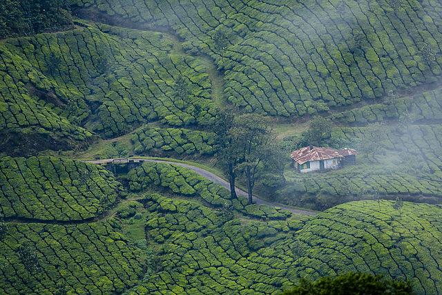Wild Kerala Tour Package Photos