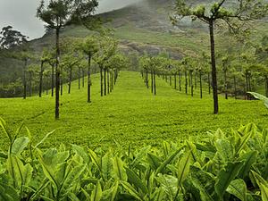 Mystical Kerala Photos