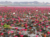 Thale Noi Waterfowl Reserve