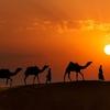 Thar Desert - Rajasthan