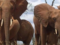 Masai Mara, Lake Naivasha & Amboseli Kenya Adventures